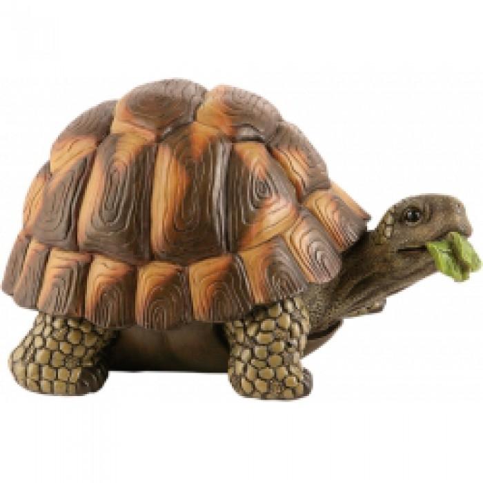 Animali da giardino tartaruga soldati giuseppe for Tartaruga da giardino
